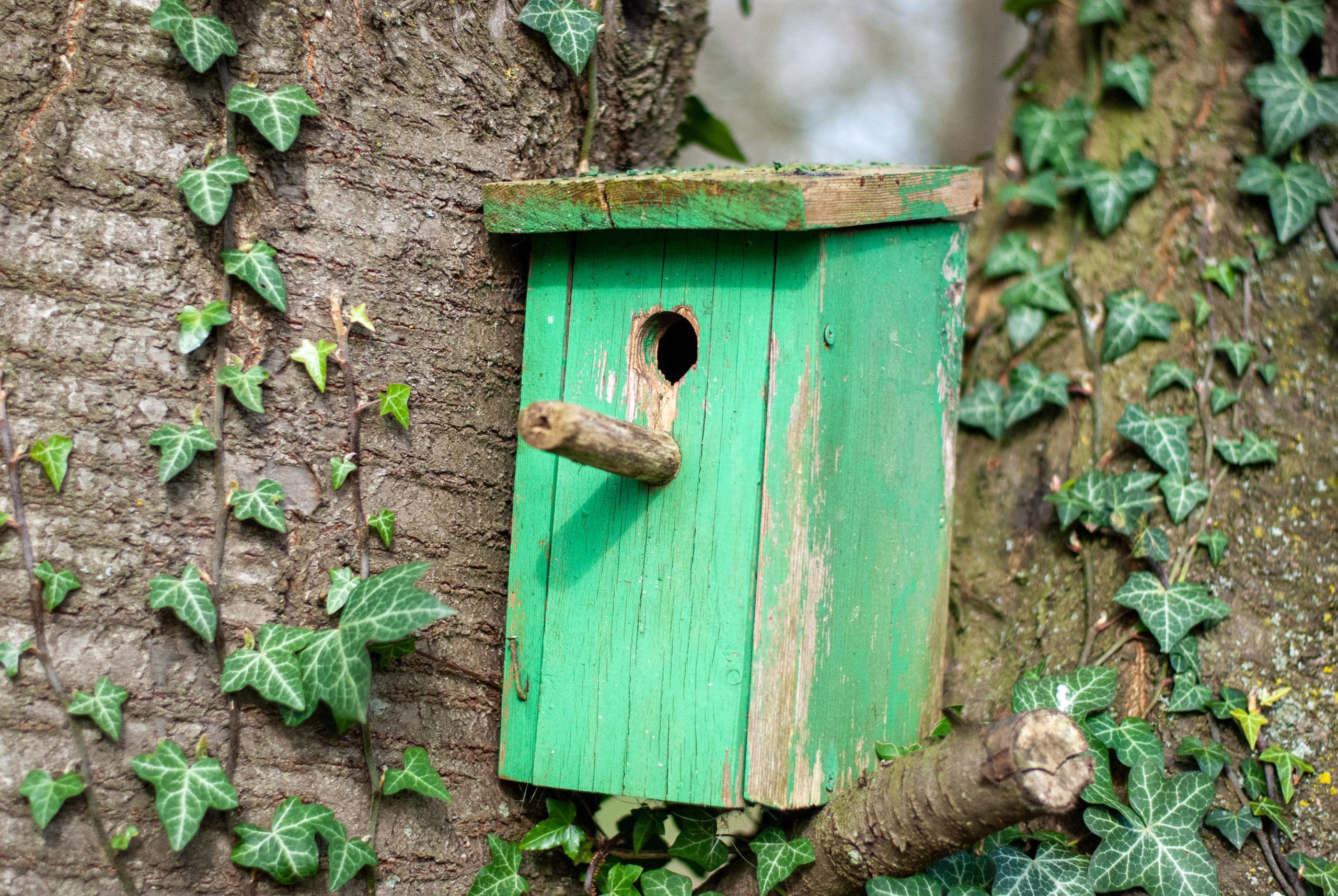 Bird House 1 scaled